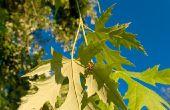 Hoe te identificeren van de verschillende soorten bladeren