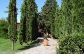 Hoe landschap met Italiaanse cipres