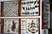 Hoe maak je een Insect vitrine