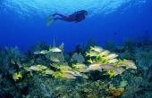 Water en Oceaan ambachten & activiteiten voor 4e-klassers