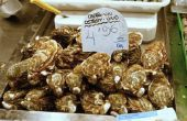 De beste methode voor het opslaan van verse oesters