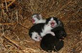De bijwerkingen van Drontal bij katten