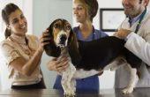 Wat Is het gemiddelde inkomen van een dierenarts?