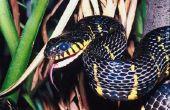 How to Keep slangen uit mijn kelder