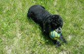 Het toepassen van de vlo en tik van preventieve op een hond.