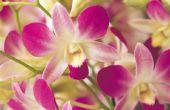 Hoe maak je zijden orchideeën
