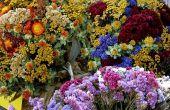 Hoe de zorg voor gedroogde bloemen