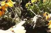 Hoe te snoeien Perennials