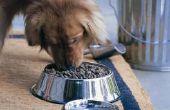 Hou honden eten volgens geur of smaak?