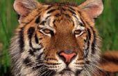 Voordelen van bedreigde dieren gevangenschap