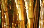 How to Tie een Trellis bamboe op de hoeken
