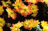 Bloemen die niet giftig zijn voor kinderen