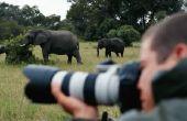 Hoe te beginnen een Wildlife fotografie bedrijf