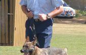 Hoe word ik een NSW politie Squad hondengeleider