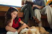 Hoe maak je je eigen hondenvoer laag residu
