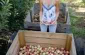 Welke oorzaken zwarte vlekken op de appelen van mijn bomen?