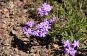 Droogte - & warmte-tolerante planten voor Zuid-Centraal-Texas