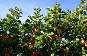 De bomen van het fruit dat je in Nebraska groeien kunt