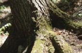 Hoe te leggen een loopbrug Over de wortel van een boom