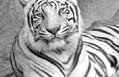 Welke dieren zijn wit & zwart?