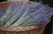 Hoe maak je lavendel kussens