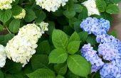 Lijst van struiken met witte bloemen