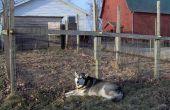 How to Build een goedkope hondenhok