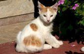 De remedie van het huis: Hoe te verwijderen van Cat Urine geur