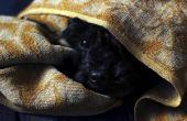 Hoe een hond te kalmeren tijdens een onweersbui