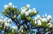 Instructies voor het maken van papier Magnolia bloemen