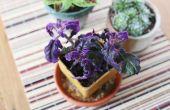 Hoe om te groeien van een Plant Purple Passion