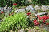 Het maken van een bloem Bed in een rotstuin