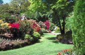 Goedkope & creatieve Landscaping ideeën