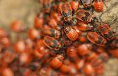 Hoe te identificeren van kleine Bugs in een huis