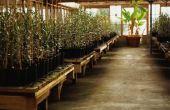 Materialen die nodig zijn om een hydrocultuur tuin