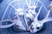 Hoe om te wassen van de schedel van een hert met zuur