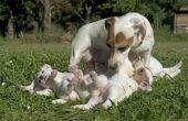 Pasgeboren Puppy stadia