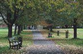 Hoe om te herstellen van een antieke parkbank