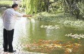 How to Stop reigers van het nemen van vis uit de vijver