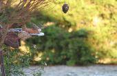 Hoe maak je een dennenappel Vogelhuis/waterbak zonder gebruik te maken van pindakaas