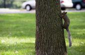 Boom eekhoorn ziekten