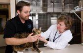 Schildklier behandeling bij katten