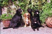 Klimplant planten die veilig zijn voor honden