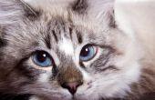 Wat te doen wanneer een oudere kat Is het verliezen van gewicht?