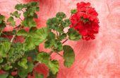 Jaarlijkse bloemen die bladluizen af te weren