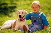 Soorten gemengd rashonden