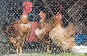 Plannen voor de bouw van een kip-trekker