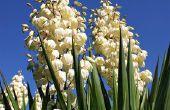 Lijst met witte bloemen