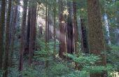 Zal Redwood Rot?