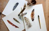 Hoe te doen een aquarel van veren van de vogel